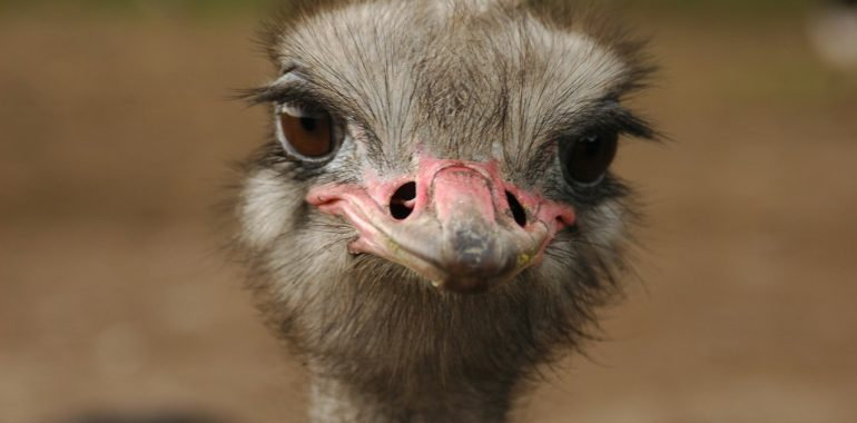 Banishing Ostrich Syndrome